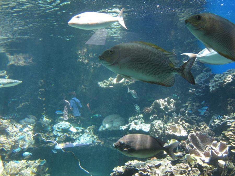 Photo: Aquarium, Noumea