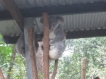 Photo: Koala Bear Sanctuary, Brisbane