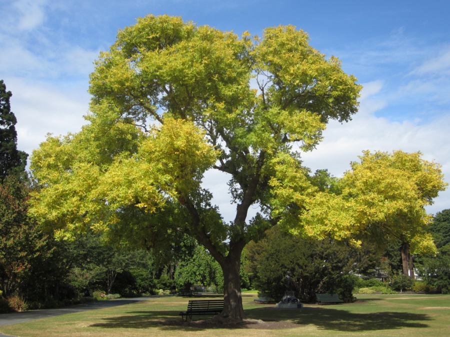 Photo: Botanic Gardens, Dunedin, New Zealand