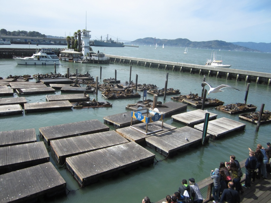 Photo: Seals at Pier 39, San Francisco