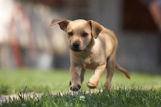 Photo: small dog running